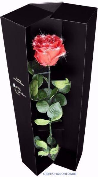 """""""Tall Red"""" rose in luxury box"""