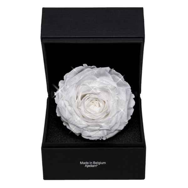 """White Premium"" rose in luxury box"