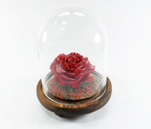 """Red Giant"" rose in glass ""natur"" dome"
