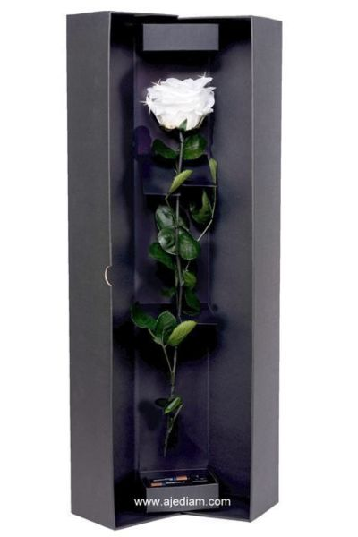 """Tall White"" rose in luxury box"